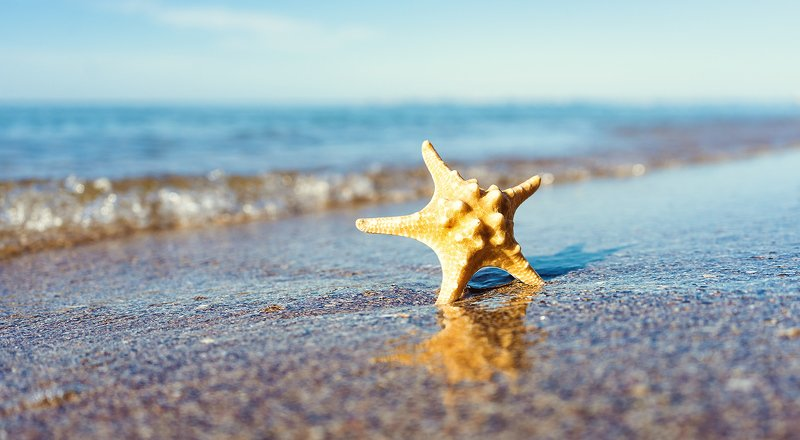 vacation, sea, ocean, starfish, beach, summer, heat, season, serenity, tranquil, travel, trip, tropical, water, surface VACATIONphoto preview