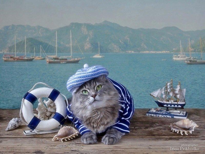 котопортрет, котонатюрморт, кошка Масяня, матрос, морской пейзаж, постановочное фото, модель, забавные котики Мариман Масяняphoto preview