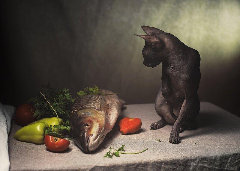 сфинкс, натюрморт, животные, в, натюрморте, анималистика Натюрморт кошка и рыбаphoto preview