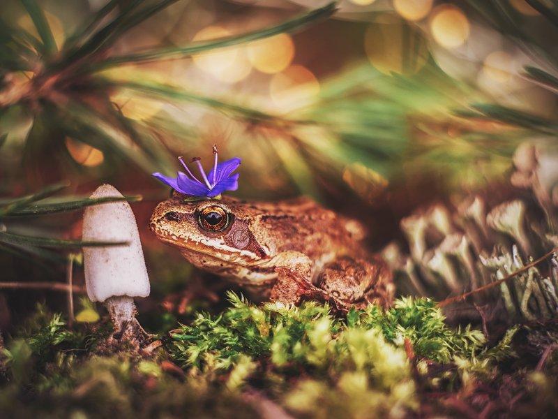 макро лягушка боке гелиос44 природа Лягушка-царевнаphoto preview
