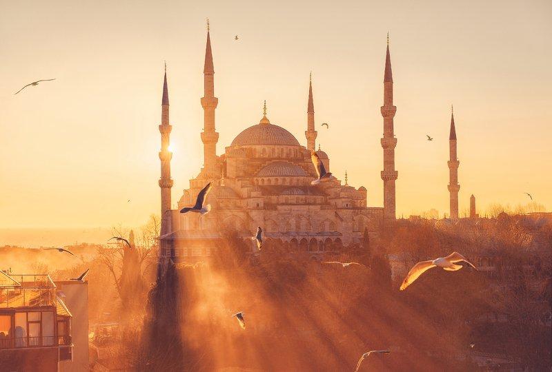 стамбул, мечеть, закат, чайки Стамбулphoto preview