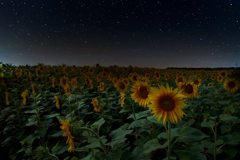 Июльская ночьphoto preview