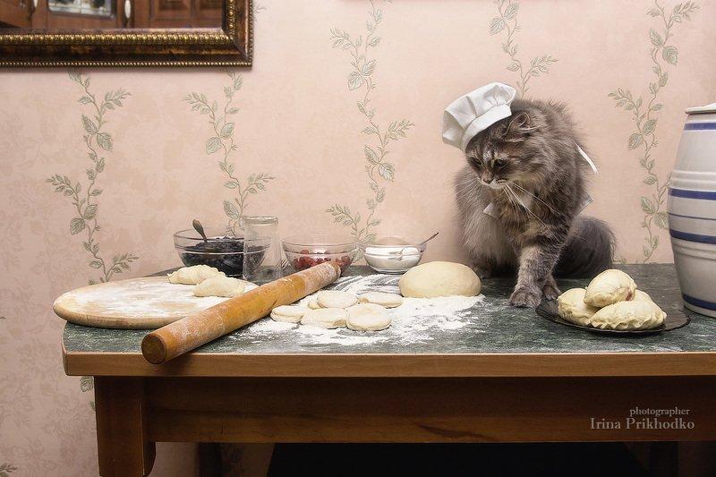 котонатюрморт, еда, приготовление вареников, кухня, котопротрет, забавные кошки, кошка Масяня Масяня - шеф варениковphoto preview