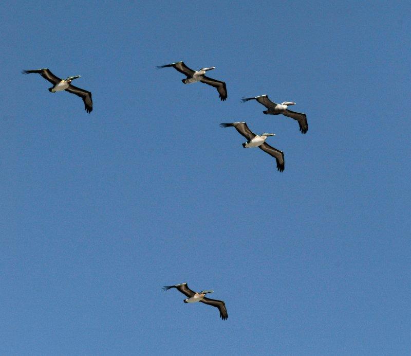 птицы полет истребители рыбыphoto preview