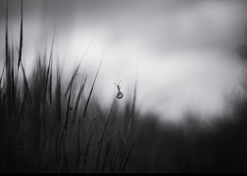 улитка чб пейзаж трава Путешественникphoto preview