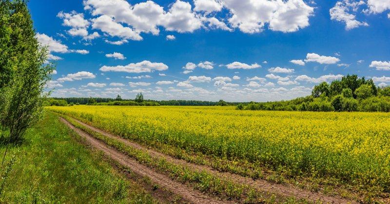 лето, дали, облака, дорога, дороги, поле photo preview