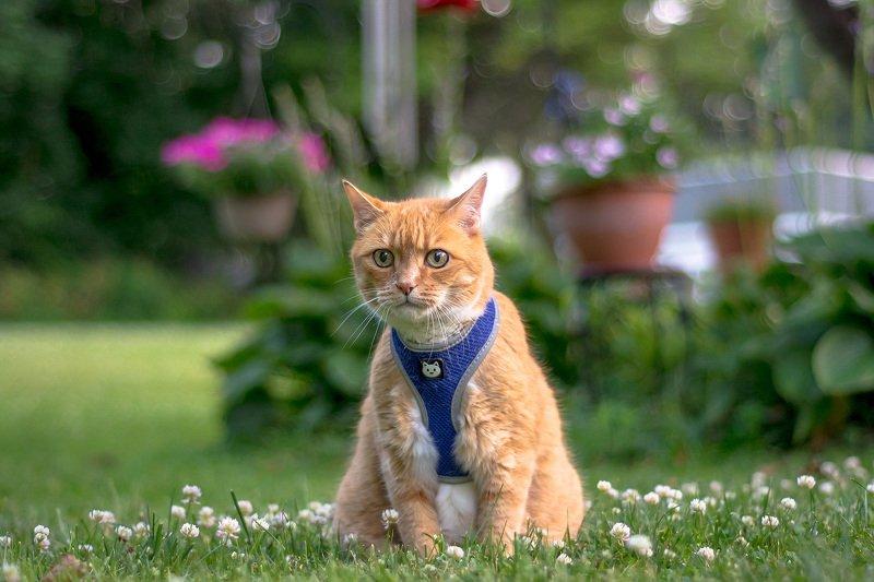 животные,кузя,рыжий,кошки,коты,любимцы,питомцы,цветы,cat, animals,кузя,cats,animals, На прогулке...photo preview