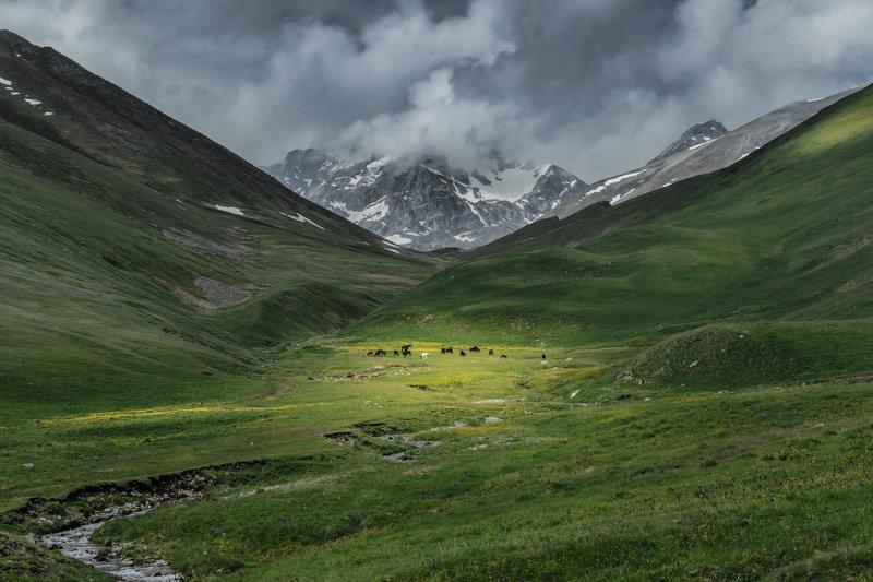 теберда, кчр, природа, лето, пейзаж, мухинский перевал, горы, животные, кони, тучи, Тебердинский заповедникphoto preview