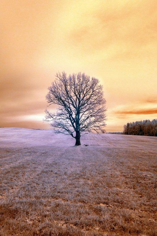 infrared,ик-фото,инфракрасное фото, инфракрасная фотография, пейзаж, осень В теплом свете осеннего дня.photo preview