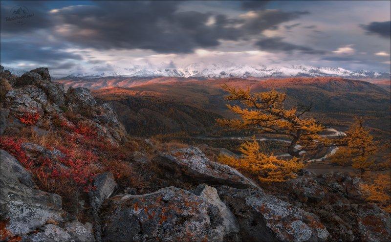 курайская степь, таджилу, тадилу, осень, северо-чуйский хребет, горный алтай, урочище, фототур Сибирский бонсай ... фото превью