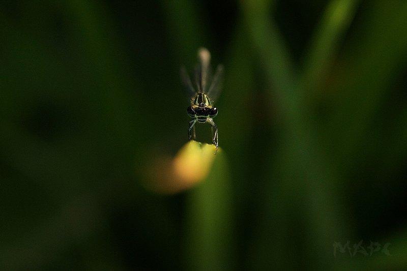 макро стрекоза лето Очень сердитая стрекозаphoto preview