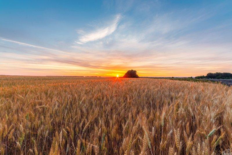 тамбов, тамбовщина, рассвет , восход , донское , тамбовская область, пшеничное поле, Встречая Тамбовский рассветphoto preview