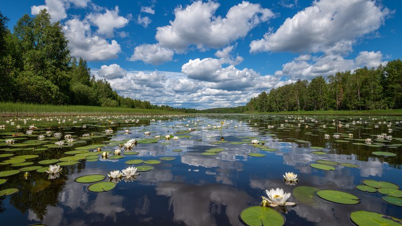 великий двор,вологодчина,кема,север,лето,кувшинка,река,небо, ***photo preview