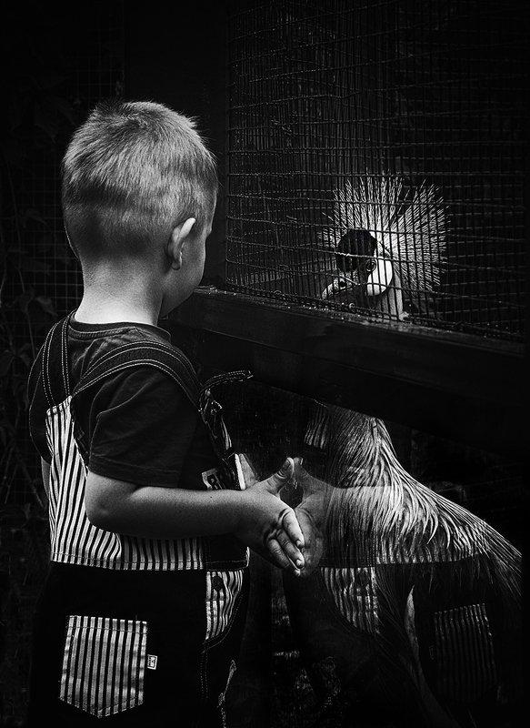 Зоопарк/Zoophoto preview