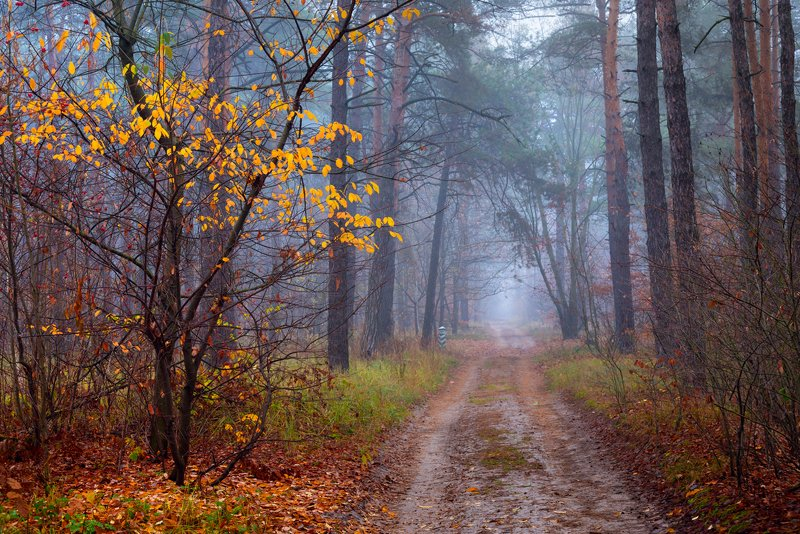 лес, осень, ноябрь, туман Туманом кроет лес ноябрьскийphoto preview