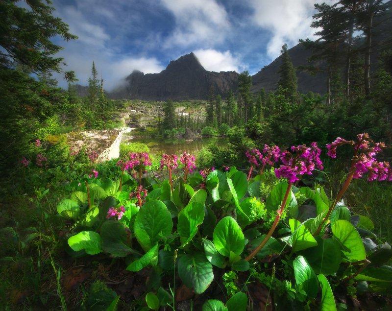 ергаки, горы, саяны, западныйсаян, сибирь, фототур Летние Ергаки фото превью
