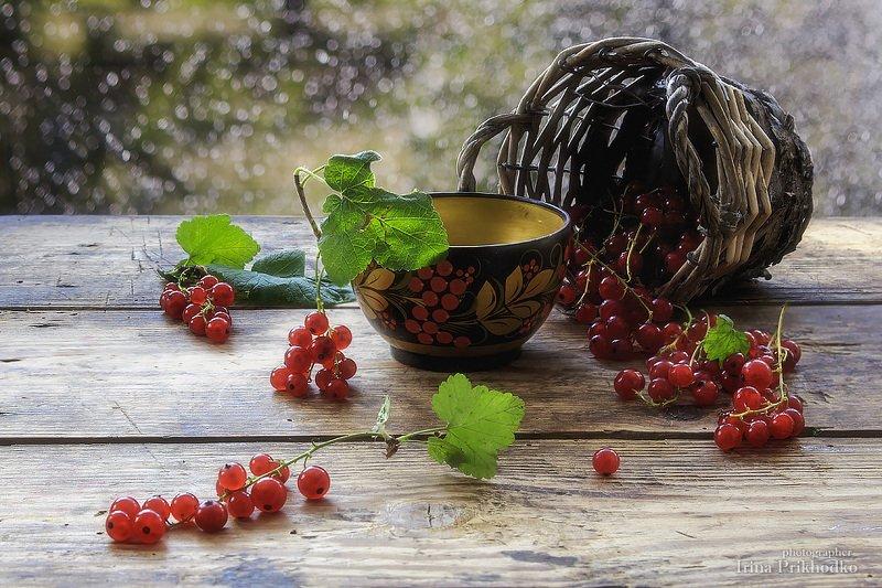 натюрморт, лето, ягоды, красная смородина Поречкаphoto preview
