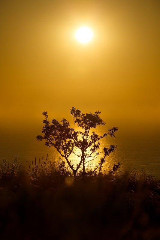 закат, пейзаж, солнце, дерево Закат на Фиолентеphoto preview