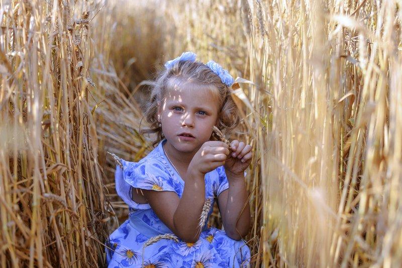 Пшеничное лето.photo preview