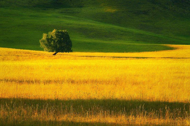 Про одинокое дерево...photo preview