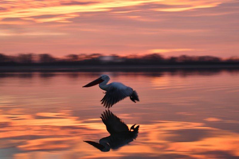 bird Golden flier II.photo preview