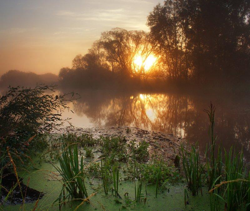 рассвет, утро, волчья, пейзаж, туман, лето, украина, река, dawn, morning, wolf, landscape, fog, summer, Рассвет на реке Волчьяphoto preview