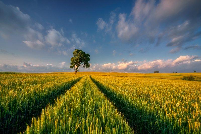 landscape Bread growsphoto preview