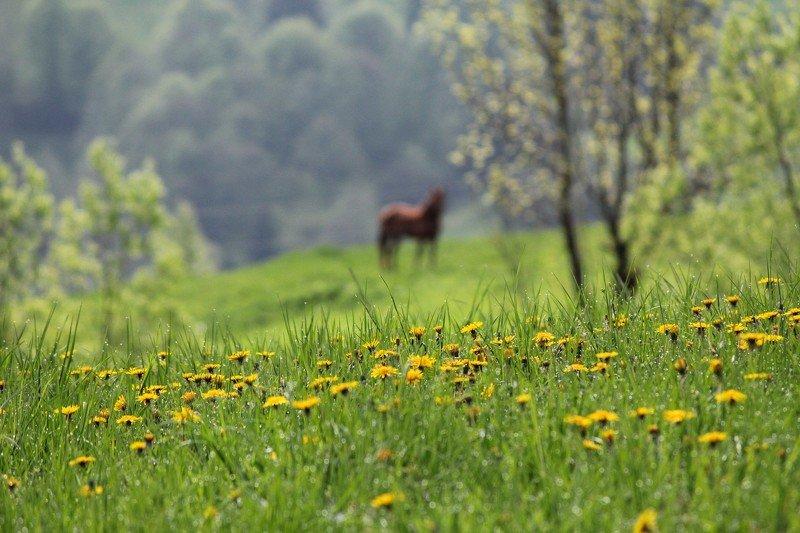 весна, май, цветы, утро, роса Однажды майским утром...photo preview