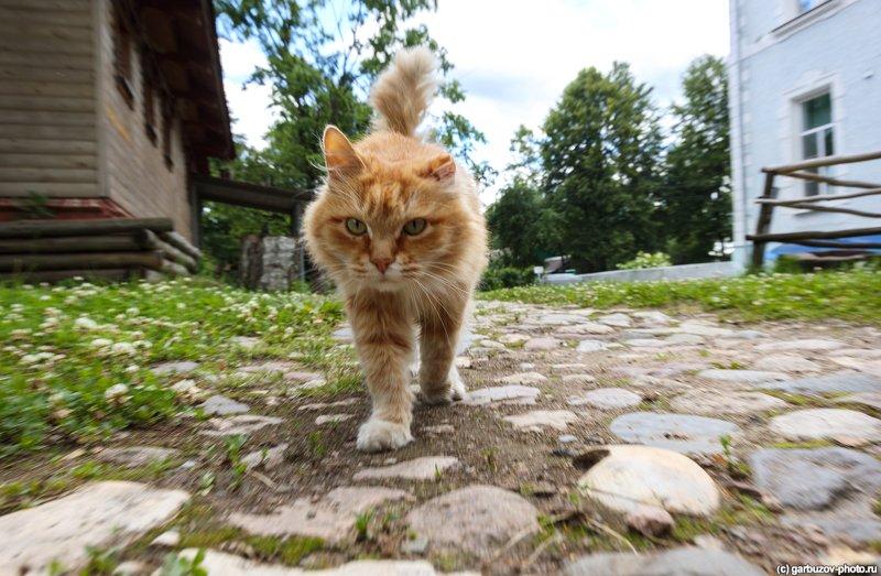 Котейка из города Гаврилов-Ямphoto preview