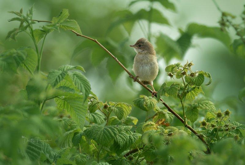 природа, лес, животные, птицы Чуть-чуть подожду фото превью