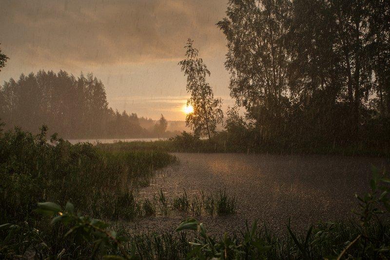 Грянул летний дождьphoto preview