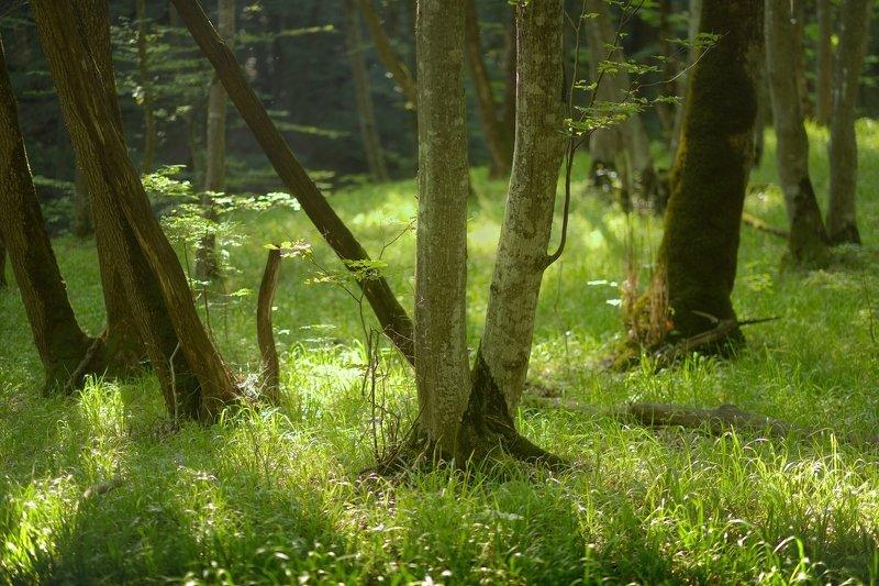 лес утро лето Утро в лесуphoto preview