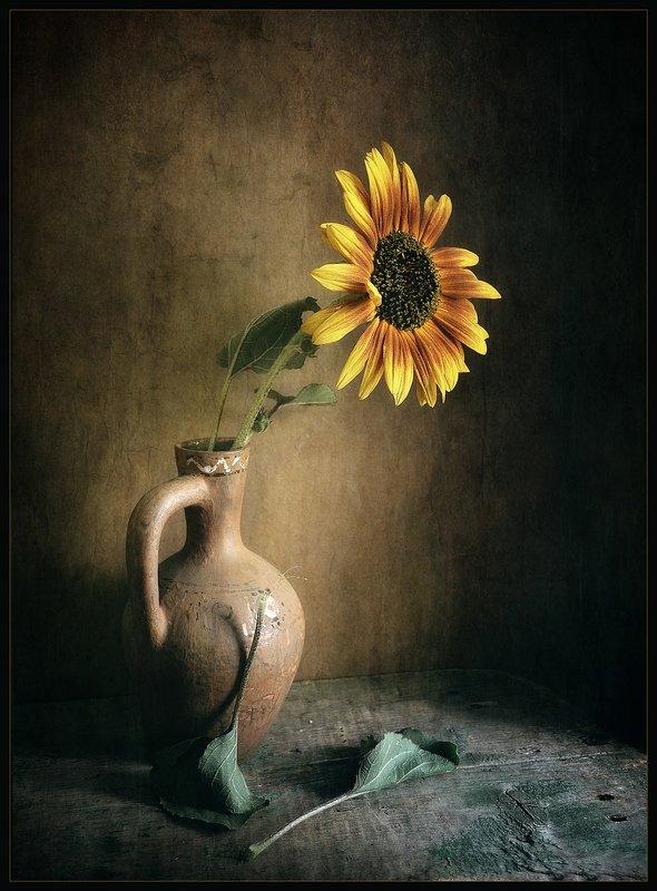 Соняшник..photo preview