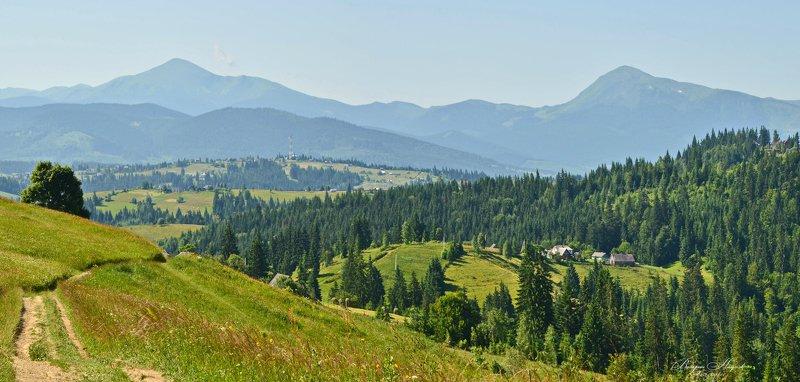 карпаты, горы, вершина г. хомяк, яблуница, поляница, июнь Карпатыphoto preview