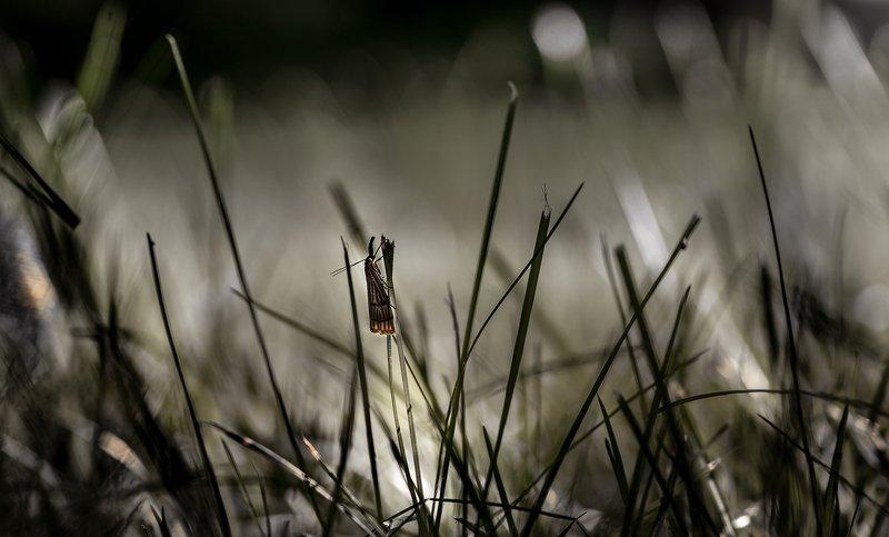 природа, макро, трава, бабочка, гризайль Гризайльphoto preview