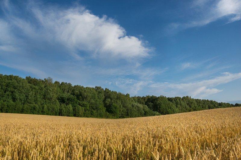 лето, пейзаж, природа Полевой пейзаж середины летаphoto preview