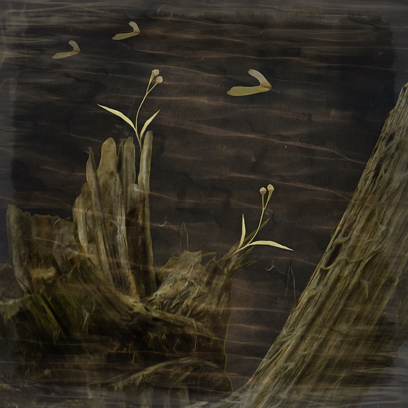 Из жизни растенийphoto preview