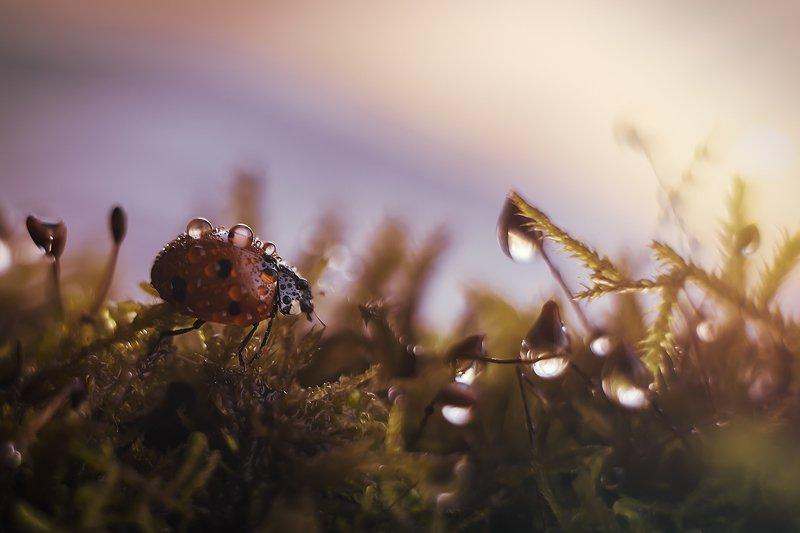 божьякоровка жуки закат насекомые гелиос44 \