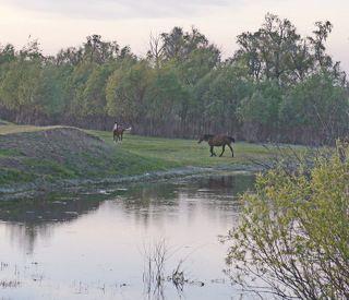 Пасутся кони у реки.