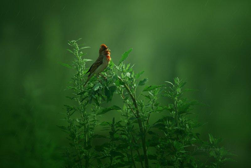 природа, лес, животные, птицы Рассветная трельphoto preview