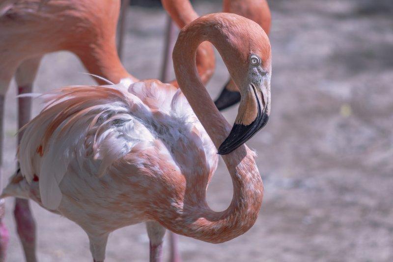 глаза, фламинго Грустные глаза фламингоphoto preview