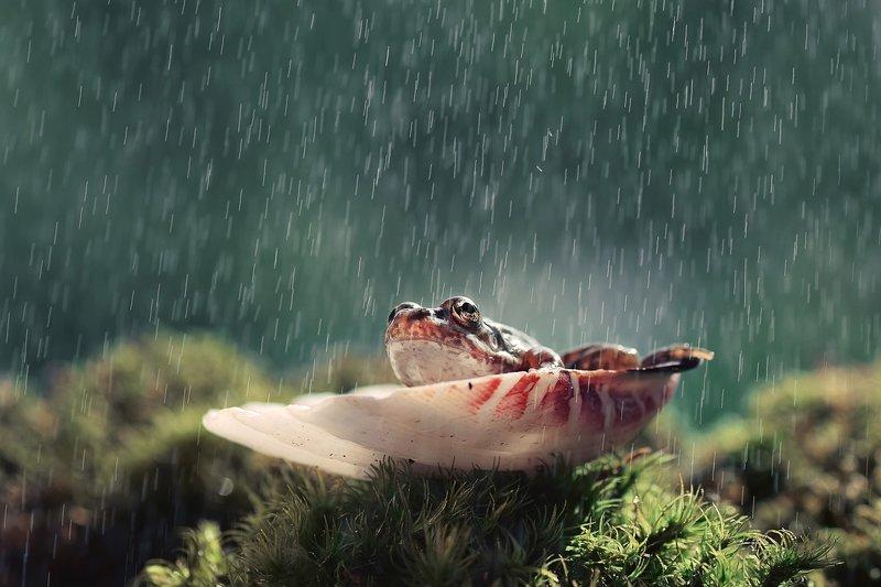 Под дождикомphoto preview