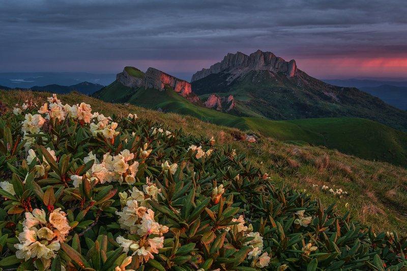 закат, большой тхач, малый тхач, асбестная, горы, пейзаж, рассвет, кавказ, адыгея, ачешбоки, рододендроны, Рододендроны Большого Тхачаphoto preview