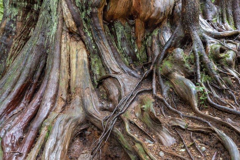 Канада, Ванкувер, лес, дерево Сказочный лесphoto preview