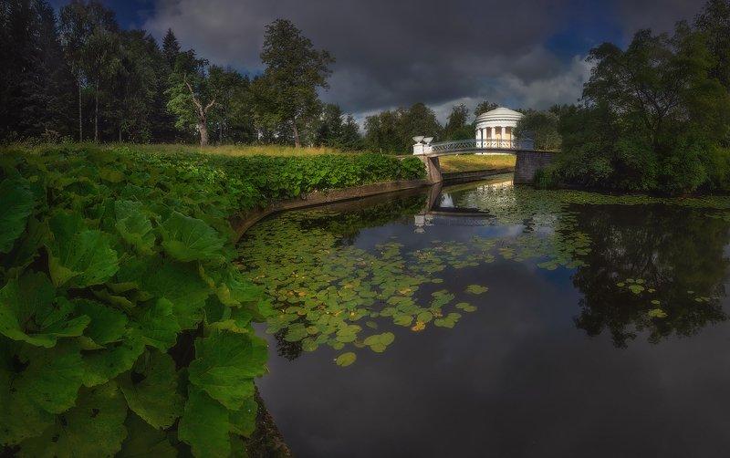 питер, павловск, утро, лето Летом:)photo preview