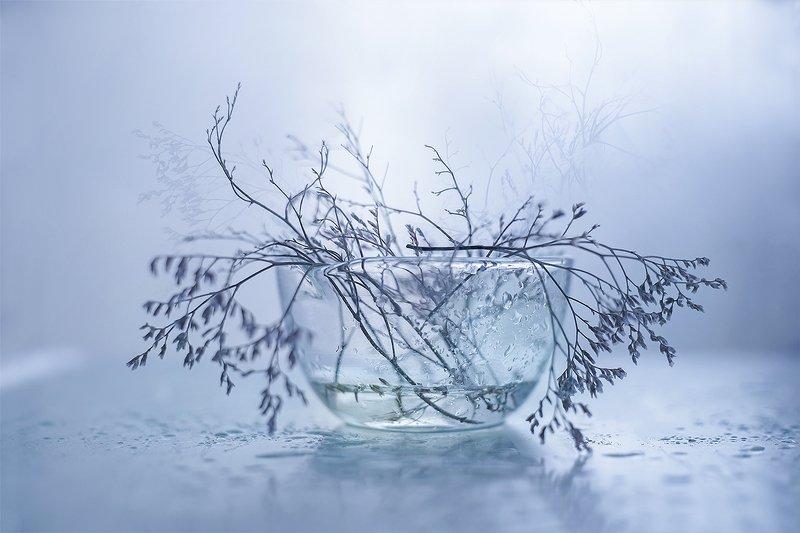 macro,nature,stil live, martwa natura, przyroda ...photo preview