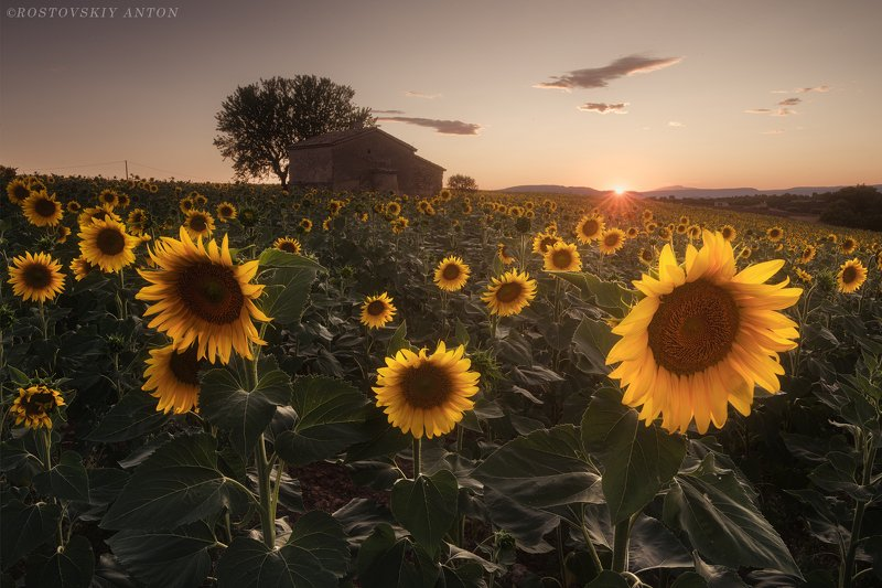 sunset, provence, france, фототур, Sunset in Provencephoto preview
