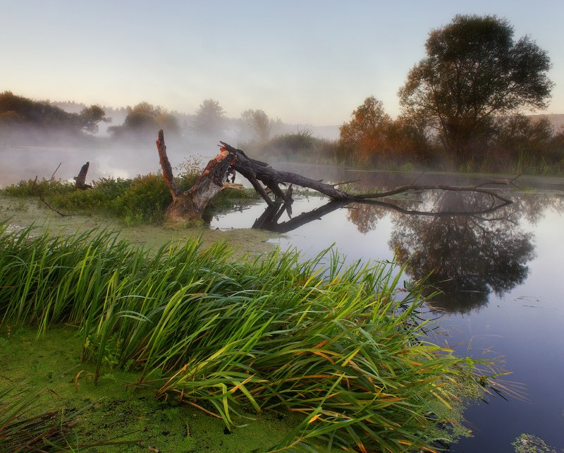 река, туман, пезаж, волчья, утро Утро на реке photo preview