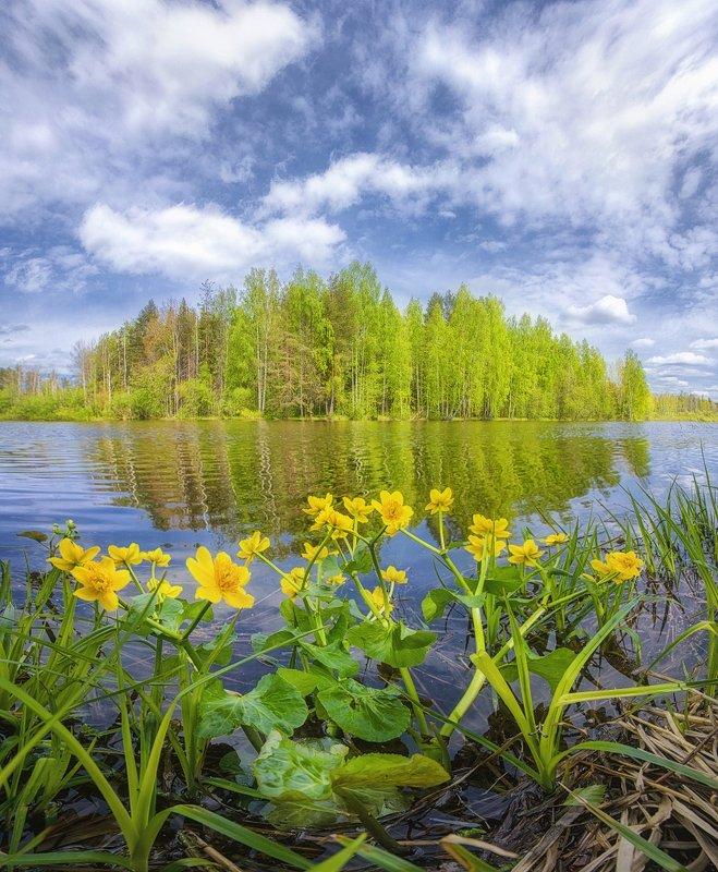 Прибрежные цветы.photo preview