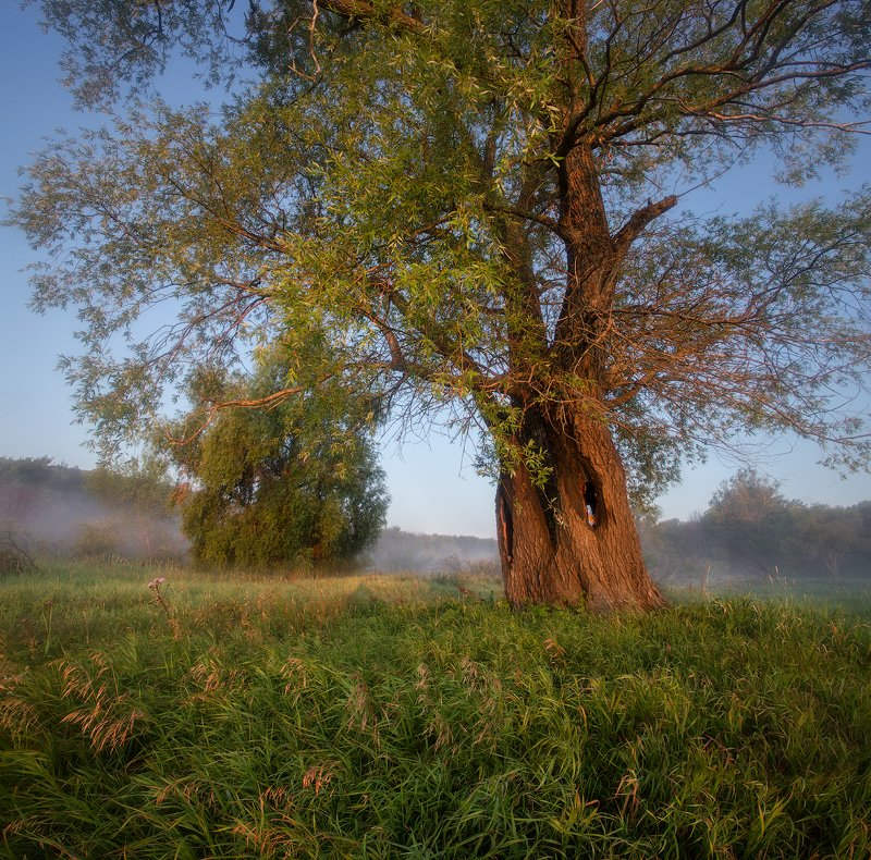 природа утро солнце туман деревья ***photo preview